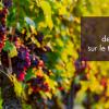 essais traitement lutte blackrot de la vigne agriculture bio Vegelia