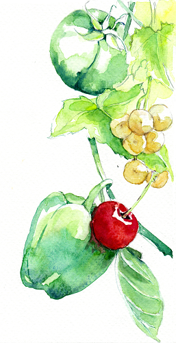 Aquarelle raisin