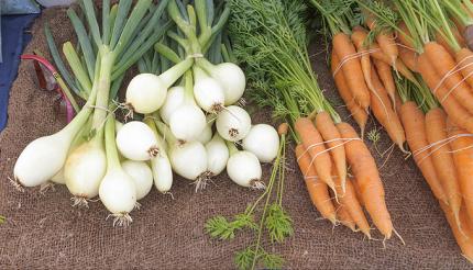 oignons carottes maches